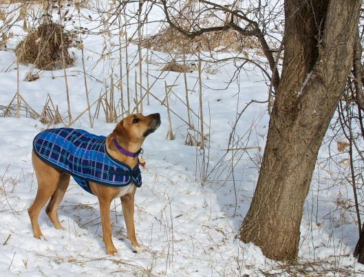 Mar_5_WalkaboutCrothers_23_2014-03-05_11-22-29_DSC_1384