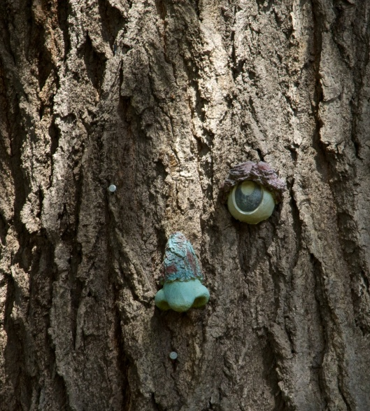 Decorative nose and eye on the red oak