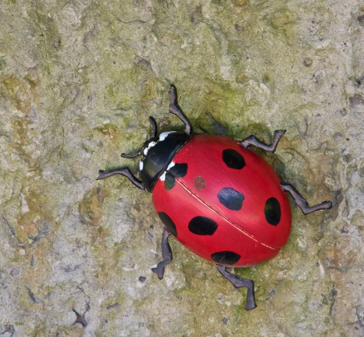 Lady Bug at Malivoire